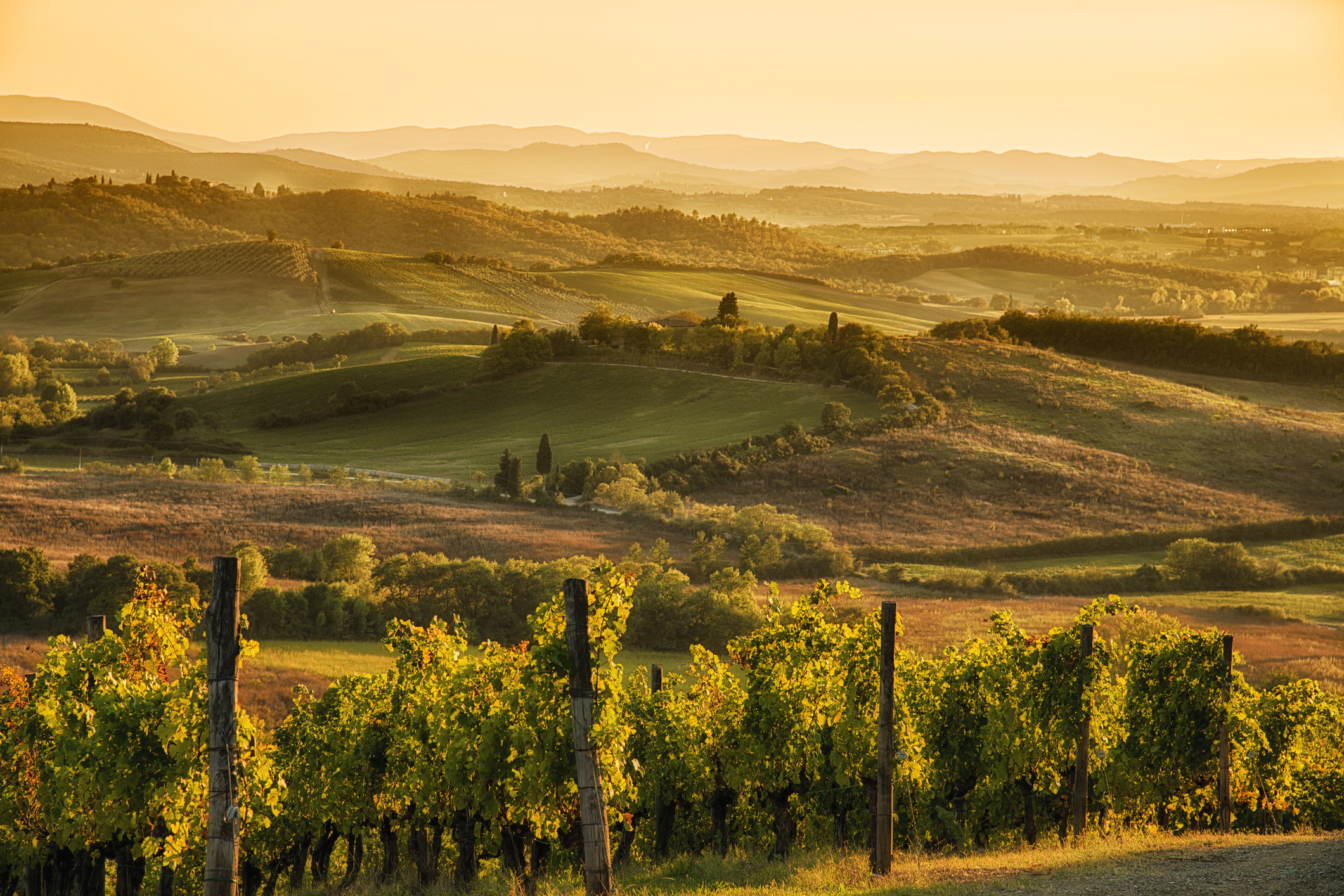 vineyards heritage